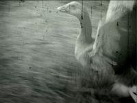 El angel caido (fallen angel)