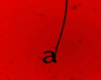 Red pou