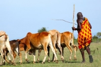 Maasai voices on climate change (and other changes, too)